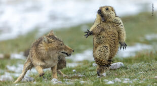 Oto kilka zdjęć nagrodzonych w konkursie Wildlife Photographer of the Year