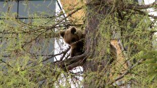Smutny koniec historii niedźwiedziej rodziny